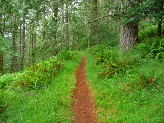 The Meadow Trail to Mt Wittenberg