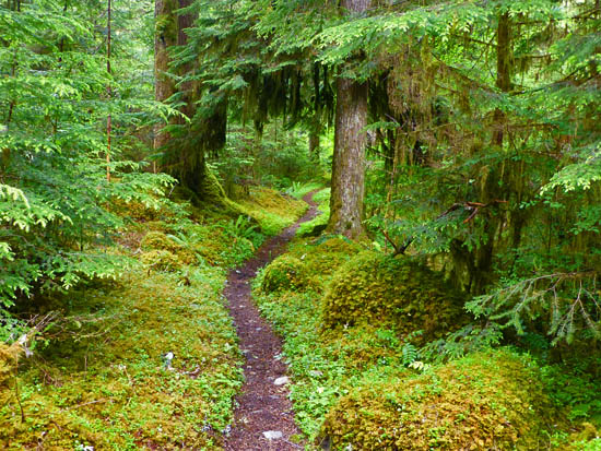 The Elwha River Trail